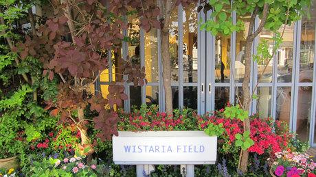 WISTARIA FIELD ORB