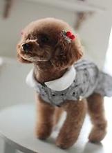 ぴの(愛犬)